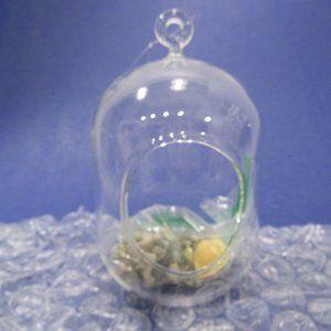 "Hanging Glass Terrarium Globe Air Plant Holder 7"""
